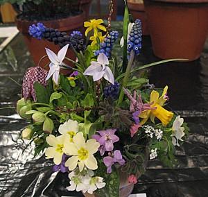 wiltshire-alpine-society-flower-arrangement